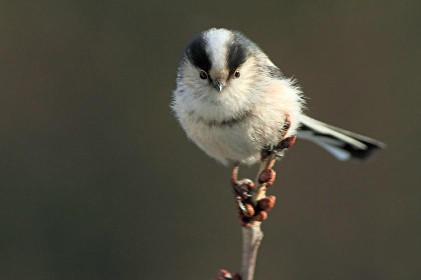 Vogelbilder zum